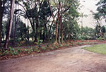 New plantings at the Queens Gardens, Townsville, 1992