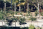 Rose garden in the Queens Gardens, Townsville, 1992