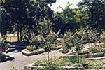 The rose garden in the Queens Gardens, Townsville, 1992